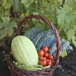 basket of veg by Rosemary Ratcliff