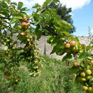 Donkeyfield Community Orchard